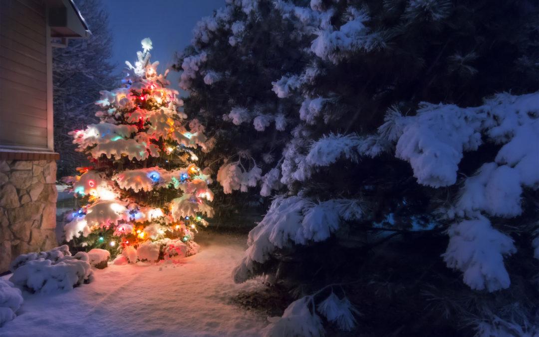 Leihen Sie sich Ihren Weihnachtsbaum bei Holz Schröer!
